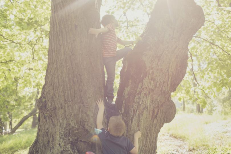 Kaksi pientä poikaa kiipeävät puuhun.